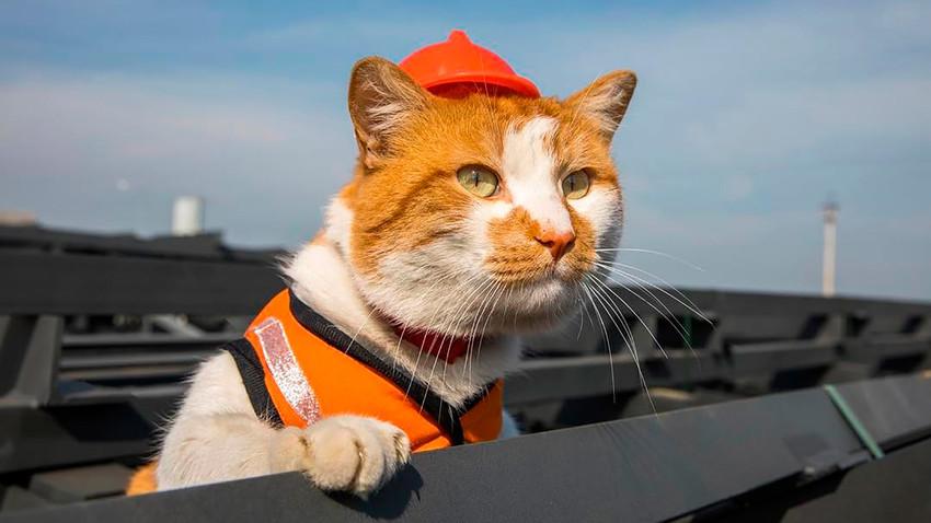 گربهای که در روز گشایش پل کریمه، حواسها را از نمایش پوتین پرت کرد