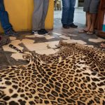 Skin Jaguar