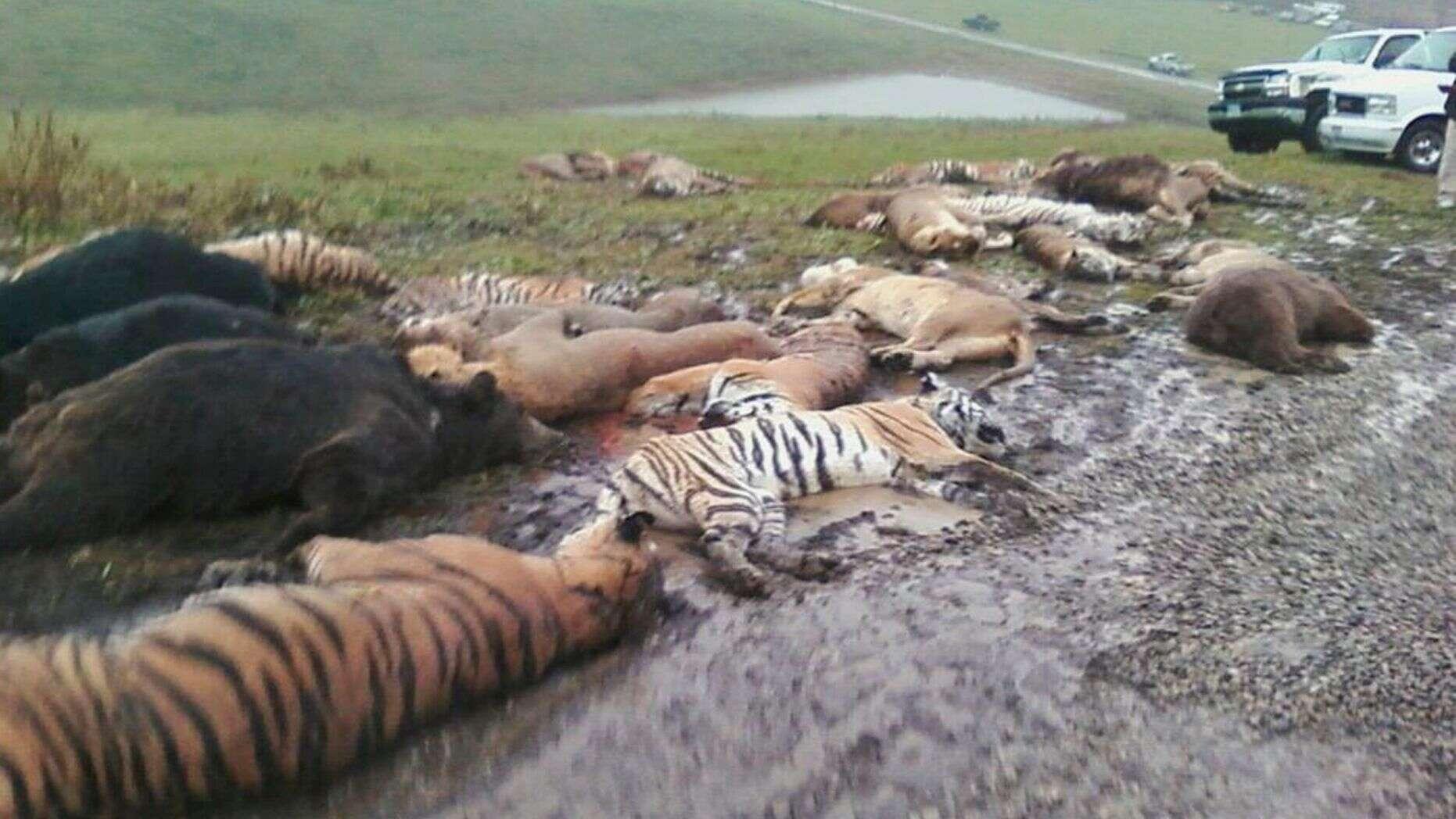 Exotic Animals Loose Higg