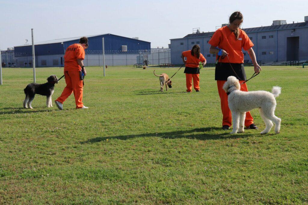 سگ دبرا گرین ماجرای سریالی دبرا پادکست چنلبی